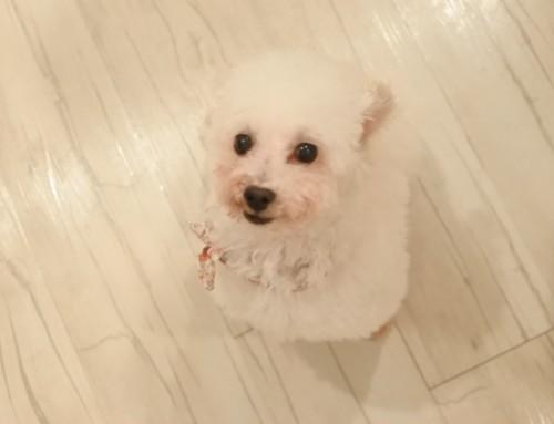 保護犬を迎え入れて1か月。どうして子犬を買うのではなく成犬の里親となったのか