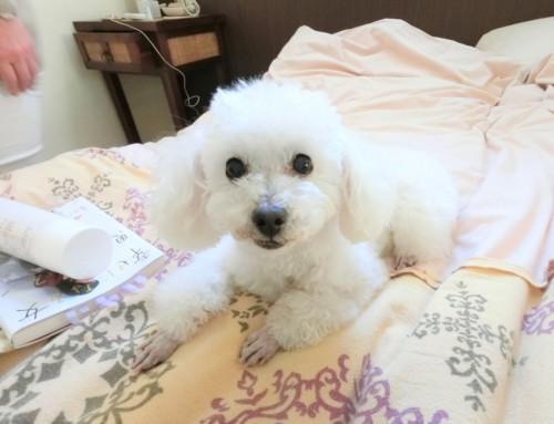 愛犬を連れて温泉旅!伊豆のペットOKホテル、四季の蔵に泊まってきました♡
