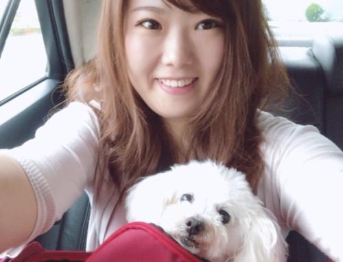 愛犬こころと飛行機で旅行へ行ってきた!ペットを預けて本当に大丈夫?どんな様子か詳しく解説します【ANA/JAL編】
