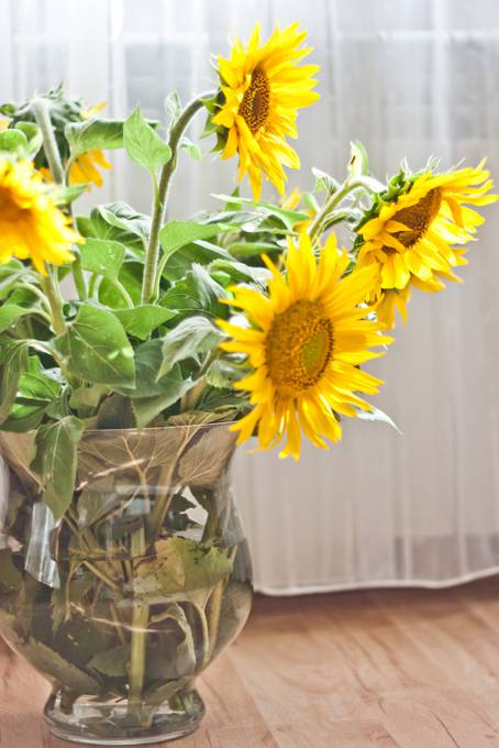 photo-sunflowers-vase-curtain-yellow